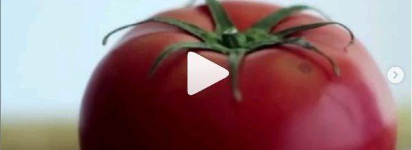 Información sobre agrotóxicos en el mundo